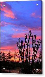 Acrylic Print featuring the photograph Ocotillo Sunset 1 by Dawn Richards