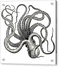 Octopus Octopus Vulgaris - Vintage Acrylic Print