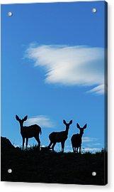 Oh Deer Acrylic Print