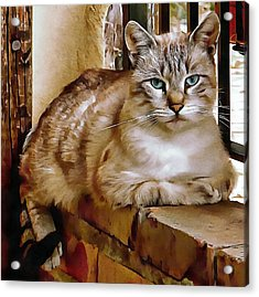 Acrylic Print featuring the photograph Old Blue Eyes by Dorothy Berry-Lound
