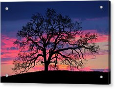 Acrylic Print featuring the photograph Old Oak Sunset by John Rodrigues