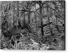 Olympic Rainforest Acrylic Print