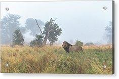 On The Hunt Acrylic Print