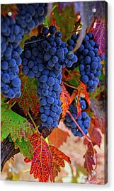 On The Vine II Acrylic Print