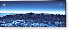 Acrylic Print featuring the photograph One Tree Hill - Blue by Darryl Dalton