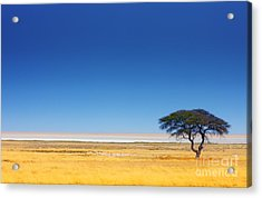 Open Field With Salt Pan In Background Acrylic Print
