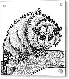 Opossum Acrylic Print