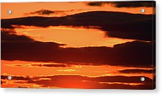 Orange And Black Acrylic Print