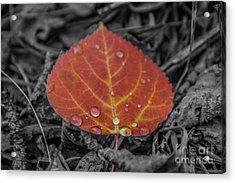 Orange Aspen Leaf Acrylic Print