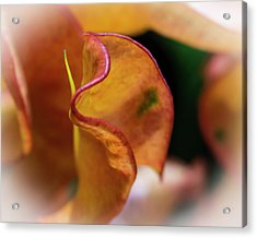 Orange Croton Acrylic Print