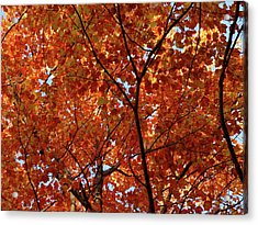 Orange Everywhere Acrylic Print