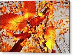 Orange Fall Leaves Acrylic Print