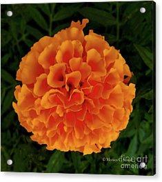 Orange Flowers No. O15 Acrylic Print
