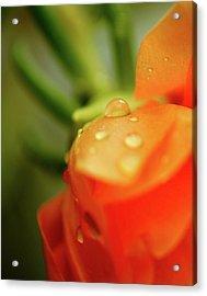 Orange Glow Acrylic Print