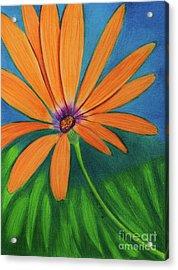 Orange Symphony On A Cool Spring Day  Acrylic Print