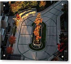 Orange Trees In Autumn Acrylic Print