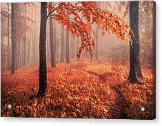 Orange Wood Acrylic Print