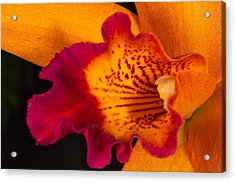 Orchid 479 Acrylic Print