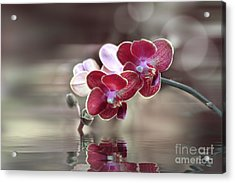 Orchid Reflection Acrylic Print