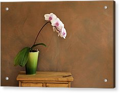 Orchid Still Life Hz Acrylic Print by Yinyang