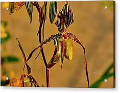 Orchid Study Eight Acrylic Print