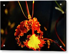 Orchid Study Four Acrylic Print