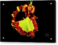 Orchid Study Nine Acrylic Print