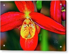 Orchid Study Seven Acrylic Print