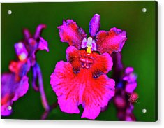 Orchid Study Three Acrylic Print