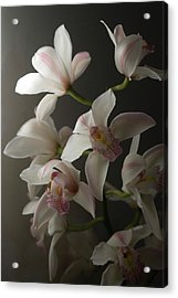 Orchids, Close-up Acrylic Print by Kate Connell