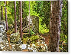 Ossian's Seat, The Hermitage, Perthshire Acrylic Print by David Ross