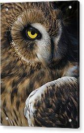 Owl Strikes A Pose Acrylic Print