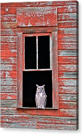 Acrylic Print featuring the photograph Owl Window by Leland D Howard