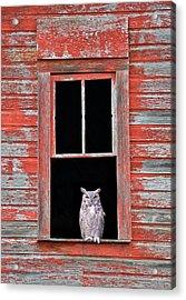 Owl Window Acrylic Print
