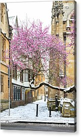 Acrylic Print featuring the photograph Oxford Almond Tree Blossom In The Snow by Tim Gainey