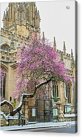 Acrylic Print featuring the photograph Oxford Almond Tree Blossoming In The Snow by Tim Gainey