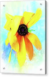 Flopsy - A Charming Wild Black-eyed Susan  Acrylic Print