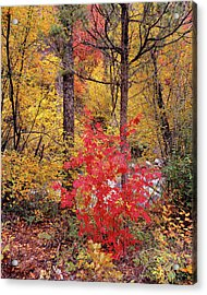 Painted Forest Acrylic Print by Leland D Howard