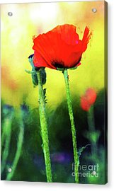 Painted Poppy Abstract Acrylic Print