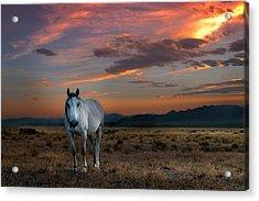 Pale Horse Acrylic Print