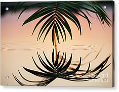 Palm Light Reflection Acrylic Print by Tim Gainey