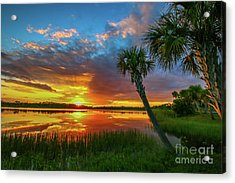 Acrylic Print featuring the photograph Palm Tree Sunset by Tom Claud
