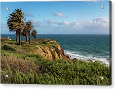 Palm Trees Blowing In The Wind Acrylic Print