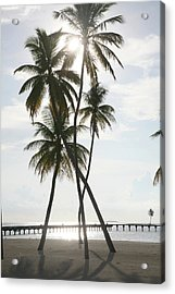 Palm Trees On A Beach Acrylic Print