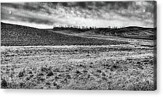 Acrylic Print featuring the photograph Palouse Treeline by David Patterson