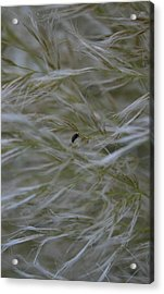 Pampas Grass And Insect Acrylic Print