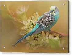 Parakeet Sitting On A Limb Acrylic Print