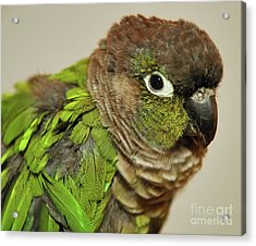 Acrylic Print featuring the photograph Parker by Debbie Stahre