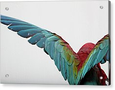 Parrot Acrylic Print by Zomi