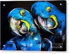 Pastel Painting Of A Blue Parrots On A Acrylic Print